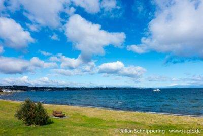 grüne Wiese und dahinter ein riesieger See Lake Taupo