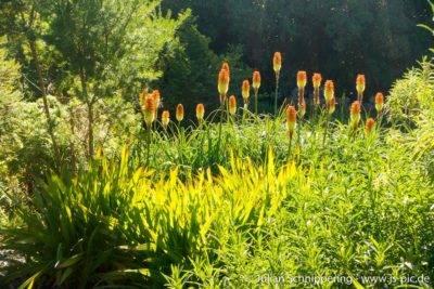 grüne blätter und schöne Blüten