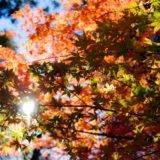 Wo lohnt sich der Start in Neuseeland im Herbst? - Backpacker Tipps
