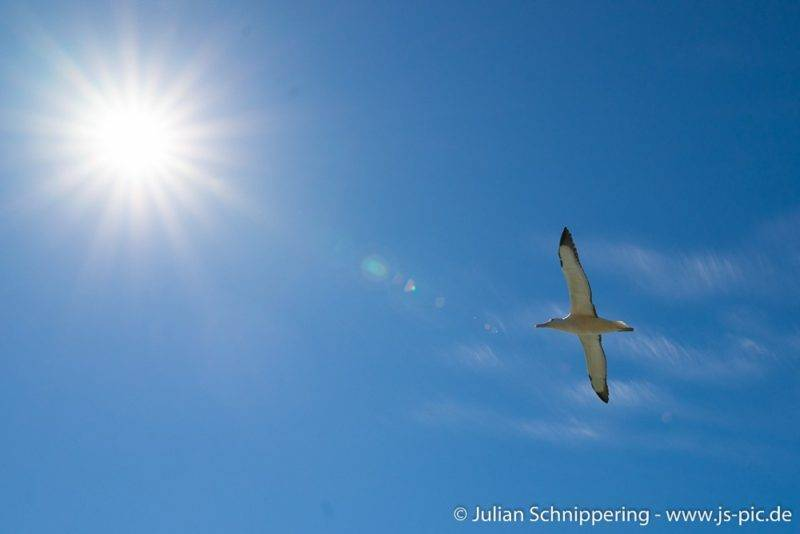 Albatross Kolonie in Dunedin