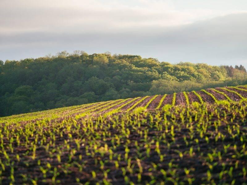 Endlose Felder auf einer Farm