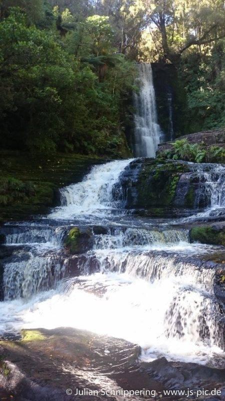 Die Mc Leans Falls liegen mitten im Urwald.