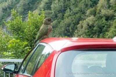 Kea auf einem anderen Auto