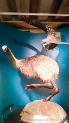großer Flugunfähiger Vogel und großer Raubvogel der jagd