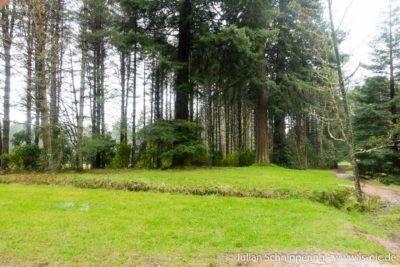 große starke 110 Jahre alte Bäume