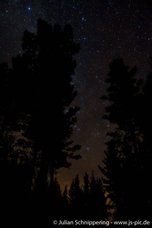 Sternenhimmel und Baumsilouetten