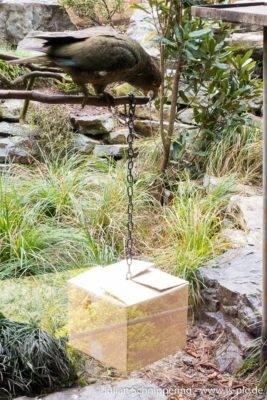 Kea sitzt auf einem Ast