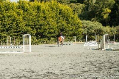 Person mit Pferd auf Reitplatz