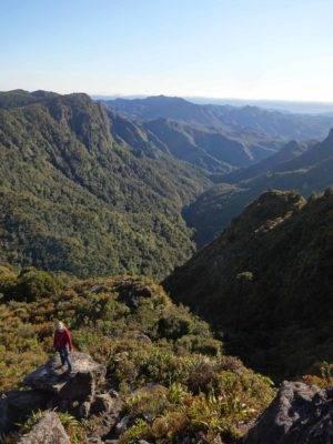 grüne Wälder und Berge in Neuseeland