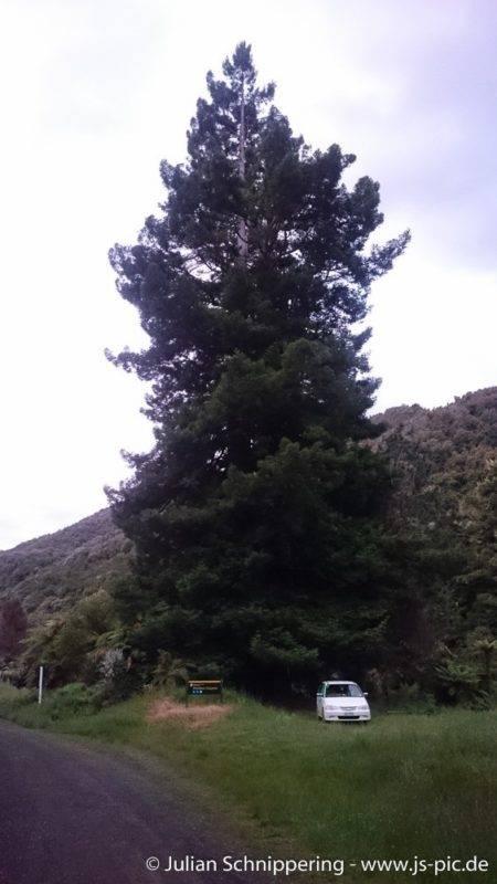 Whitikau Doc Campingplatz unter den Bäumen