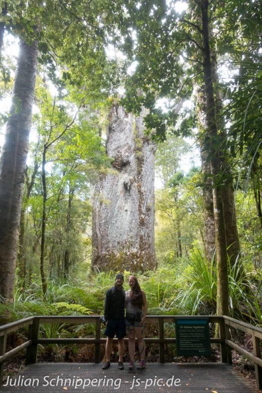 Kathi & Julian vor den großen Mammutbäumen (den Kauris) in Neuseeland. Der ganze Neuseeland Blog basiert auf unserer Arbeit