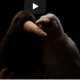 Kiwi Kurzfilm und die Gewinner unserer Aktion