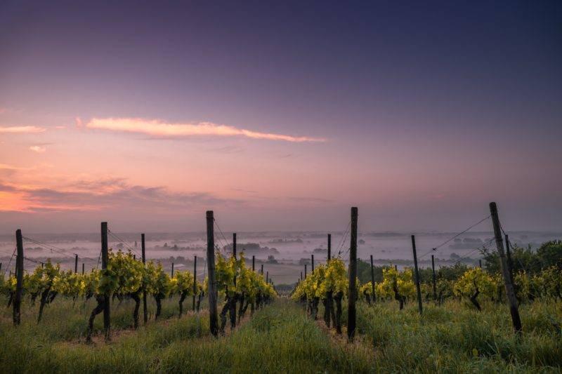 Weingut im Sonnenuntergang