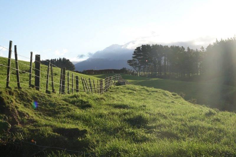 Blick auf grüne Wiesen der Farm