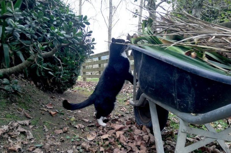 Katze schaut in die Schubkarre
