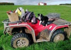 Quad als Fortbewegungsmittel auf der Farm