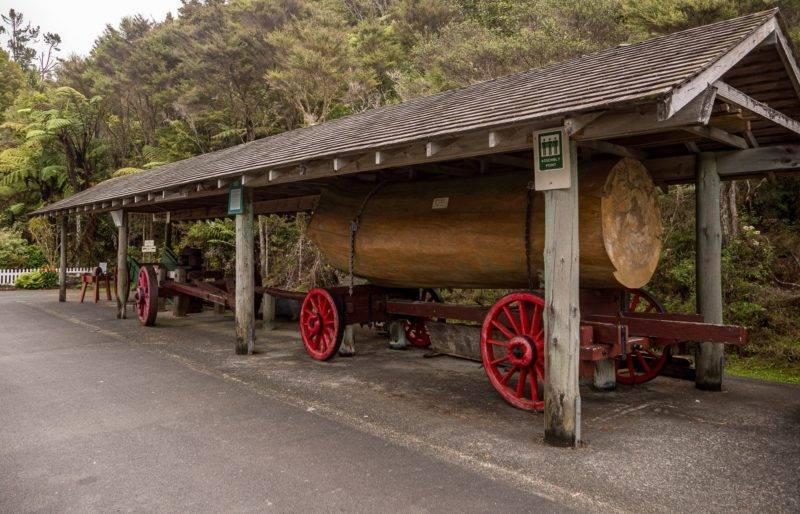 Gefällter Kauri-Baumstamm am Museum in Warkworth