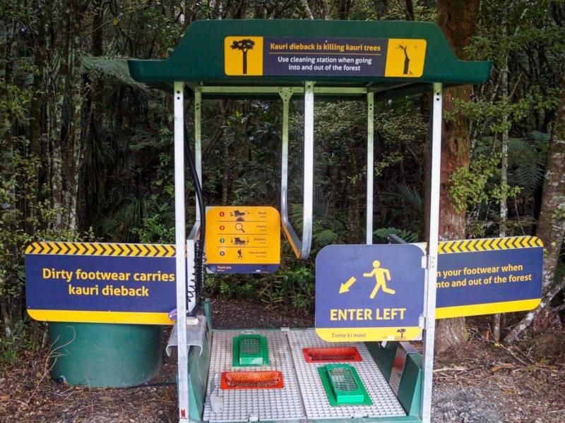 Eine Reinigungsstation gegen das Kauri-Dieback-Disease
