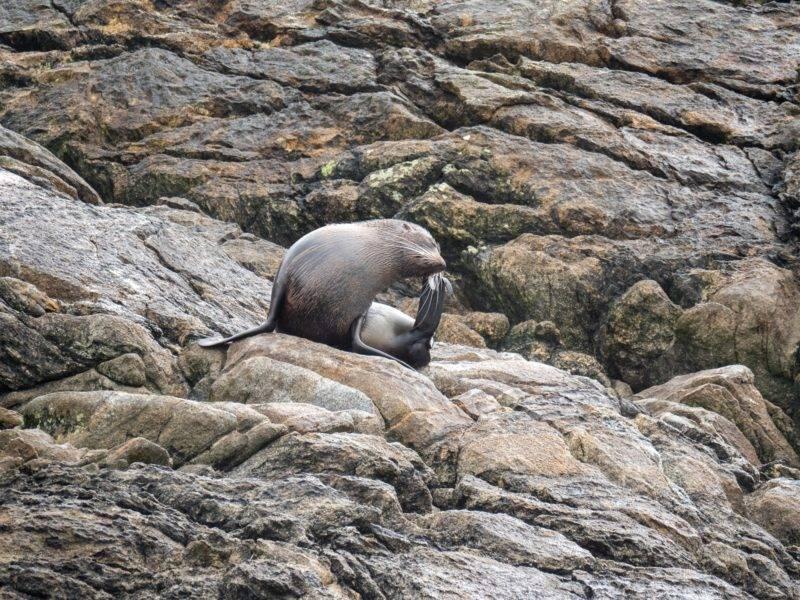 Wildlife im Doubtful Sound