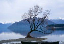 Wanaka Tree im Winter