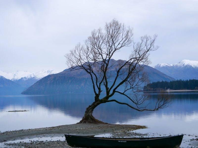 Wanaka Tree im Winter