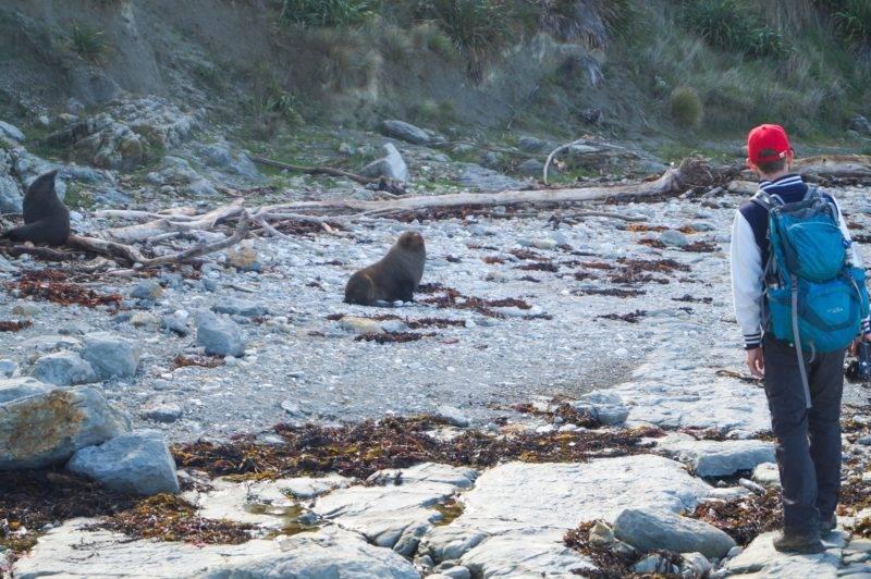 Julian inspiziert die mögliche Route durch die Seal Kolonie