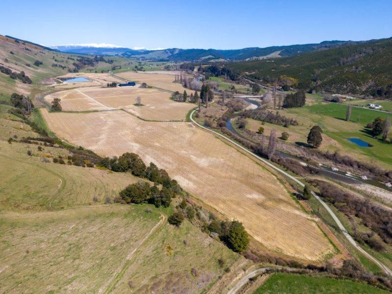 80 Hektar Hopfenfarm