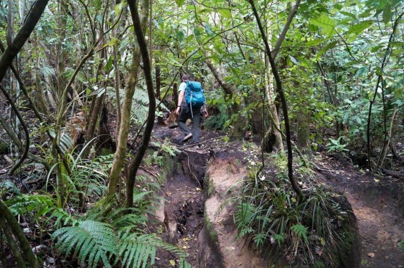 Mount Tauhara Wanderung durch den Wald