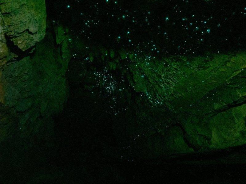 Glühwürmchen in der Waipu Cave