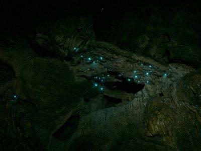 Glühwürmchen in der Abbey Cave 3