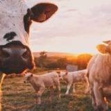Was macht die Biosecurity in Neuseeland – Backpacker Tipps