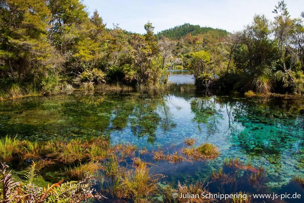 Te Waikoropupu Springs in Neuseeland