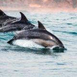 Delfinschwimmen in Neuseeland – Backpacker Tipps