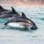Delfine schwimmen im Wasser
