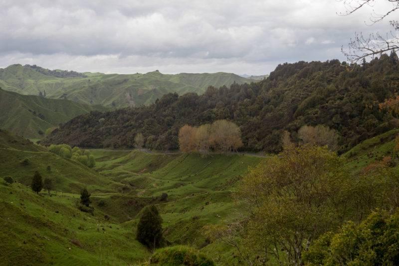 Blick auf einen Teil des Forgotten World Highway (SH43)