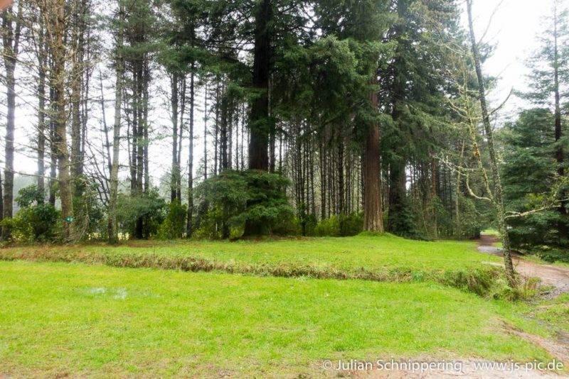 Die Redwoods in Rotorua