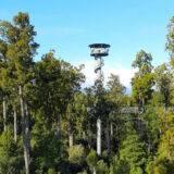 Der Tree Top Walk in Hokitika an der West Coast – Backpacker Tipps