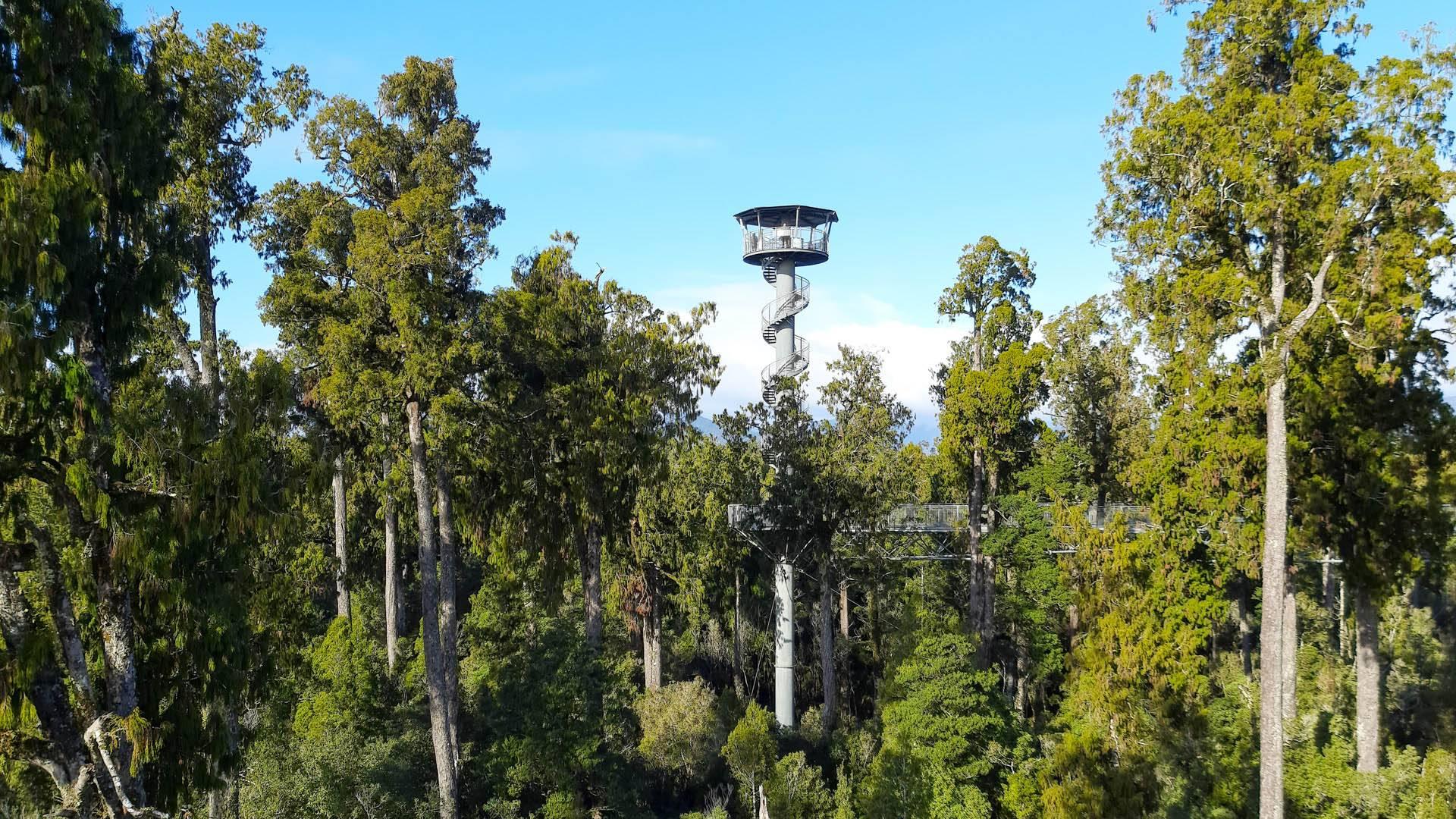 Aussicht auf Bäume und den Aussichtsturm im Tree Top Walk in Hokitika
