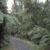 Der Regenwald entlang des Minnehaka Walk in Fox Glacier
